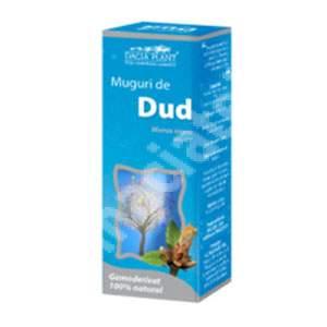 Gemoderivat Muguri de Dud, 50 ml, Dacia Plant