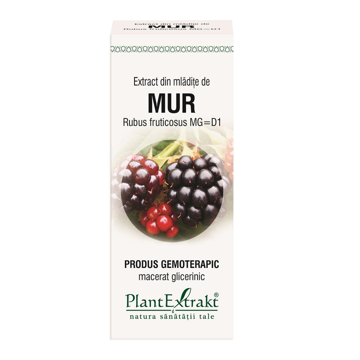 Extract din mlădițe de mur, 50 ml, Plant Extrakt